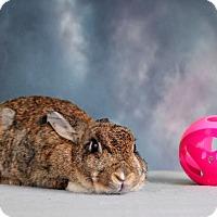 Adopt A Pet :: Eileen - Marietta, GA