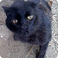 Adopt A Pet :: Diablo - Saint Clair Shores, MI