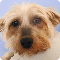 Adopt A Pet :: Mia - Chesterfield, MO