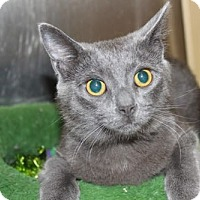 Adopt A Pet :: Madeline - Louisville, KY