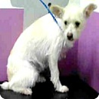 Adopt A Pet :: Cindy - Boulder, CO