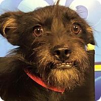 Adopt A Pet :: Forest Gump - Lafayette, LA