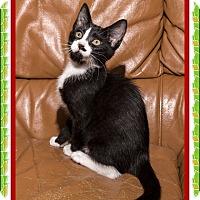 Adopt A Pet :: Cancun - Mt. Prospect, IL