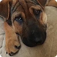 Adopt A Pet :: Sidney - New Oxford, PA
