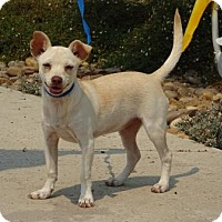 Adopt A Pet :: Raina - Lathrop, CA