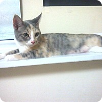 Adopt A Pet :: Bailey - Raleigh, NC