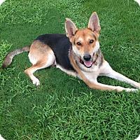 Adopt A Pet :: Felix - Nashua, NH