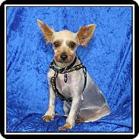 Adopt A Pet :: Lexi - Covina, CA