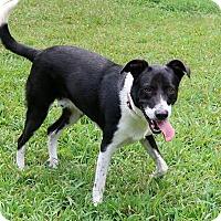 Adopt A Pet :: Bixby - New City, NY