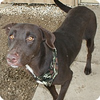 Adopt A Pet :: ZEUS - Pilot Point, TX