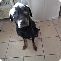 Adopt A Pet :: TYSON - New Castle, DE