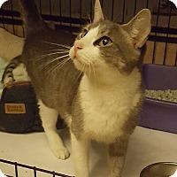 Adopt A Pet :: Sapphire - Bronx, NY