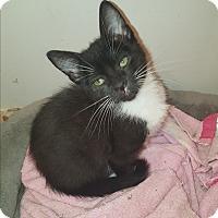 Adopt A Pet :: Lavern - Tumwater, WA