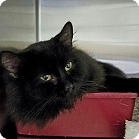 Adopt A Pet :: Boo - Elyria, OH