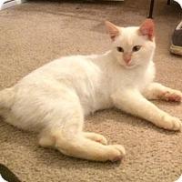 Adopt A Pet :: C Jay $75 - Seneca, SC
