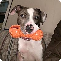 Adopt A Pet :: Rori - Baltimore, MD
