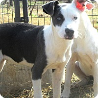 Adopt A Pet :: Lone Star - Godley, TX