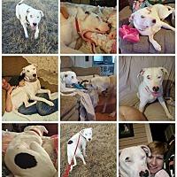 Adopt A Pet :: Gunner - Goldsboro, NC