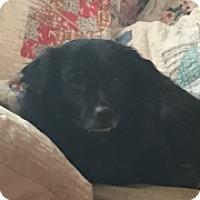 Adopt A Pet :: Emmett (ETAA) - Washington, DC