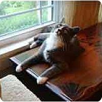 Adopt A Pet :: Lucy - Manalapan, NJ