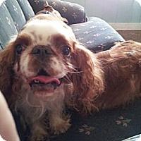 Adopt A Pet :: Dalton - Cumberland, MD