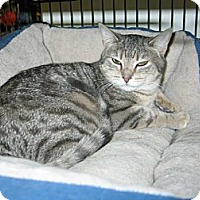 Adopt A Pet :: Calvin - West Dundee, IL