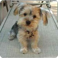 Adopt A Pet :: Mollie - West Palm Beach, FL