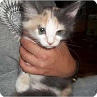Adopt A Pet :: Cleopatria - Acme, PA
