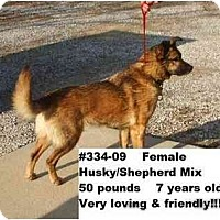 Adopt A Pet :: # 334-09 - ADOPTED! - Zanesville, OH