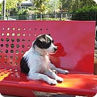 Adopt A Pet :: Tino - Miami, FL