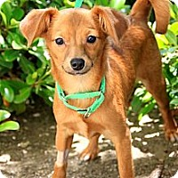 Adopt A Pet :: Grace - Mission Viejo, CA