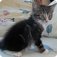 Adopt A Pet :: Cola - Acme, PA