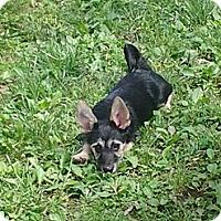 Adopt A Pet :: Ears - Hollis, ME