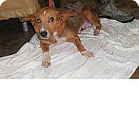 Adopt A Pet :: Patsy - Kendall, NY