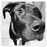 Adopt A Pet :: Lexie - Hollis, ME