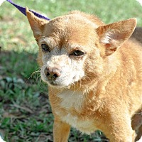 Adopt A Pet :: Petey - Gainesville, FL