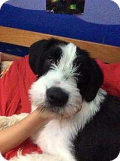 Dog Rescue Denver Colorado