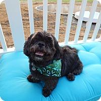 Adopt A Pet :: Chase - West Deptford, NJ