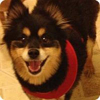 Adopt A Pet :: Isaac - Gilbert, AZ