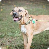 Adopt A Pet :: Victoria - Glenolden, PA