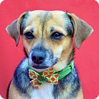 Adopt A Pet :: Sara Lee - Irvine, CA