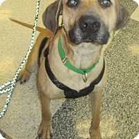 Adopt A Pet :: Willie - Humble, TX