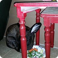 Adopt A Pet :: Bianca - Williston, FL
