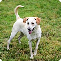 Terrier (Unknown Type, Medium) Mix Dog for adoption in Hagerstown, Maryland - GYPSY LEE