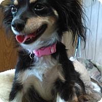 Adopt A Pet :: Katy - PHOENIX, AZ
