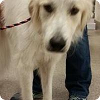 Adopt A Pet :: Jenna - Gainesville, FL