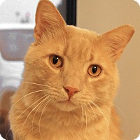 Adopt A Pet :: Moose - Colorado Springs, CO