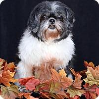 Adopt A Pet :: Miss Mandi - SAN PEDRO, CA