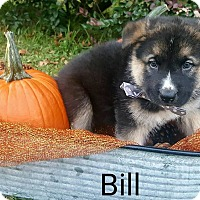 Adopt A Pet :: Bill - Gainesville, FL
