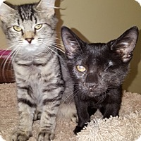 Adopt A Pet :: Betty - Delmont, PA